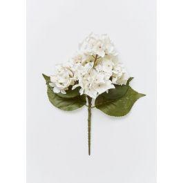 Hydrangea  Special  - White