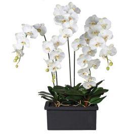 White Orchid Phalaenopsis Plant Arrangement in Black Planter