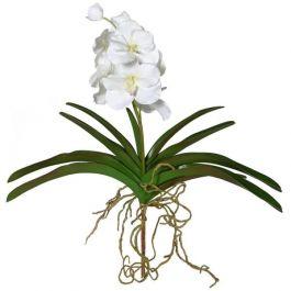 Real Feel Vanda Orchid