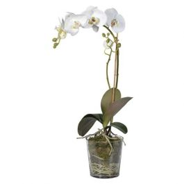 White Orchid Plant with Moss in Glass Pot