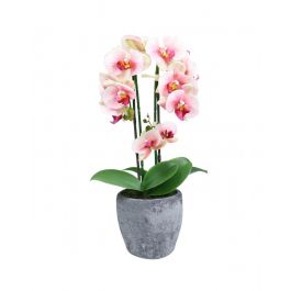 Pink Magic Touch Orchid In Oval Display Pot