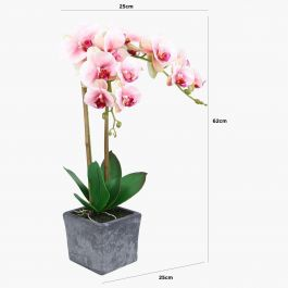 Pink Magic Touch Orchid In Square Display Pot