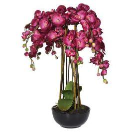 Hot Pink Orchid Phalaenopsis Large Plants in Black Ceramic Bowl