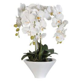 White Orchid Plants in White Ceramic Pot