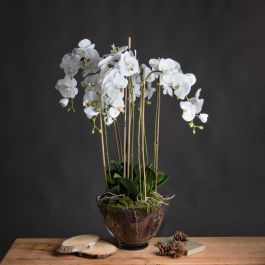 White Orchid In Glass Pot Large