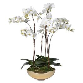 White Orchid Plants in Shallow Gold Bowl