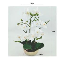 White Real Touch Orchid Flower in Display Gold Pot