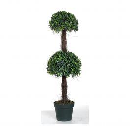 Boxwood Topiary Tree