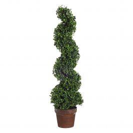 Spiral Boxwood Tree